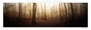 poster panoramique Brocéliande - la forêt - vue 2 - 20X60